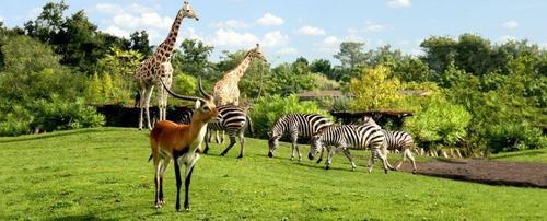 Jolie Moi de Mai et débat sur les parcs animaliers :