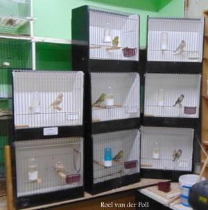 Paar vogels voor de TT .