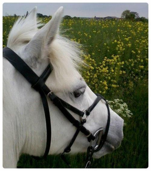 Mon poney c'est une bombe <3