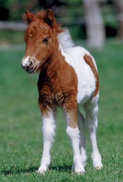 Le petit cheval.