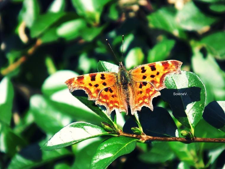 Papillon de lumière ...