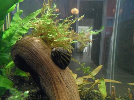 Mon nouvel aquarium : Présentation.