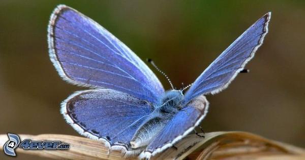 cadeau pour mon amie bluedragonbutterfly bisous :)