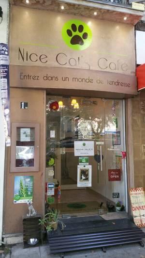 Neko Café  (Nice Cat's café)