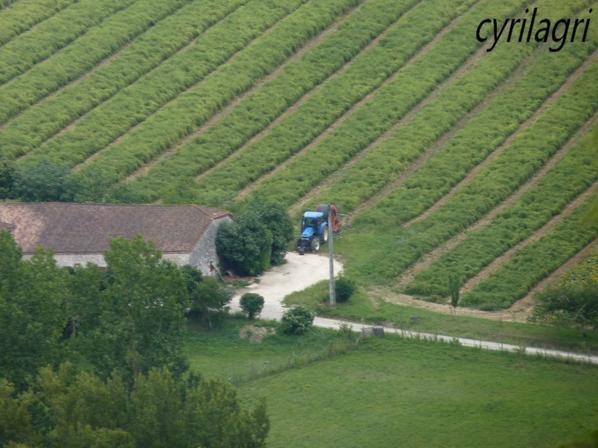 dans les vignes 2011