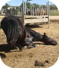 Une simple cavaliere mais un cheval en or ♥