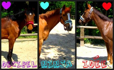 Deciel, Ninja, Idée <3