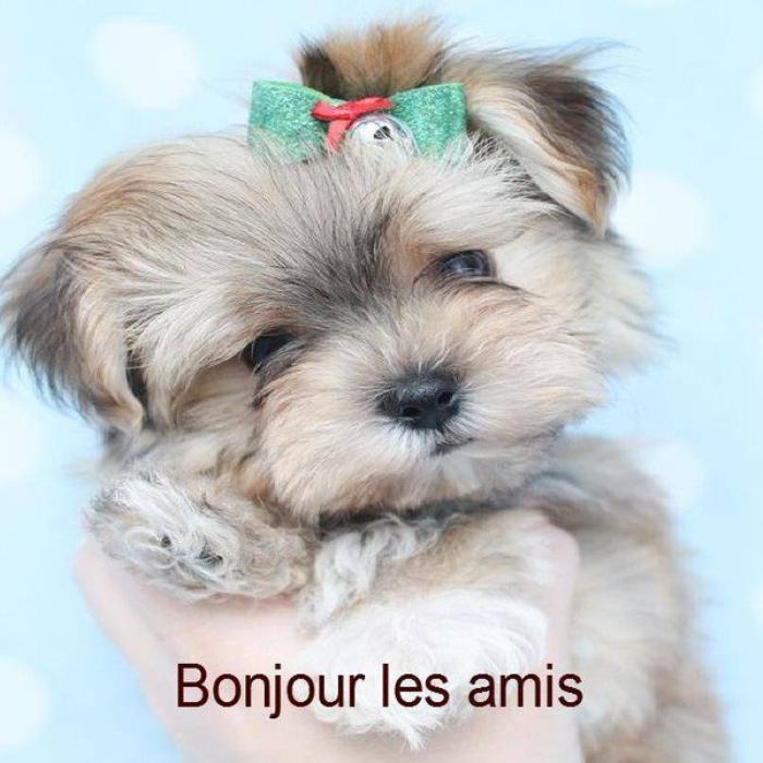 BONJOUR  MES   AMIS   NOUS  SOMMES   LE  VENDREDI  ...24  MARS  2017...C  EST  LA  STE  CATHERINE  DE  SUEDE   ...... ..
