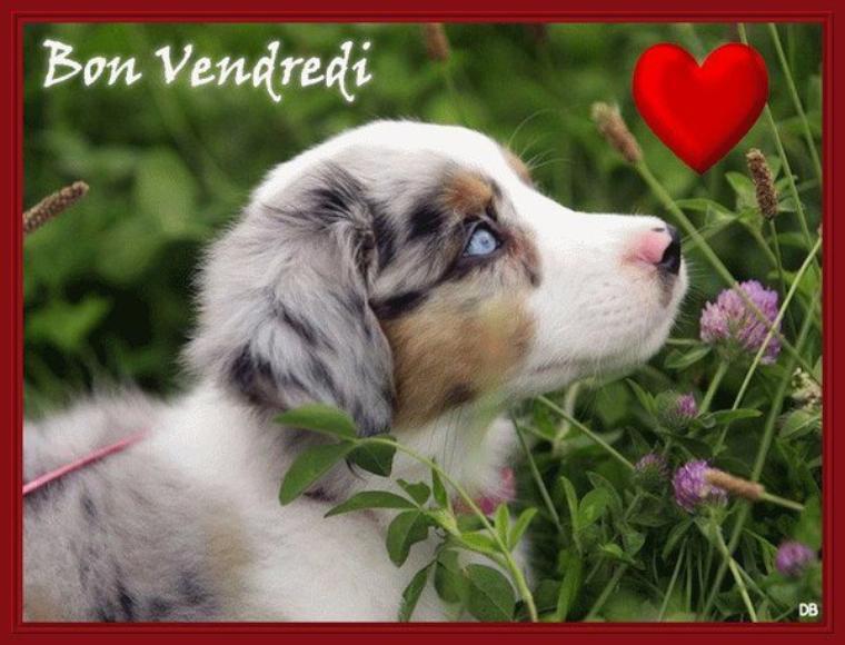BONJOUR  MES  AMIS   NOUS  SOMMES  LE  VENDREDI  04 AOUT   2017    C  EST  LA  ST  JEAN  VIANNEY.....