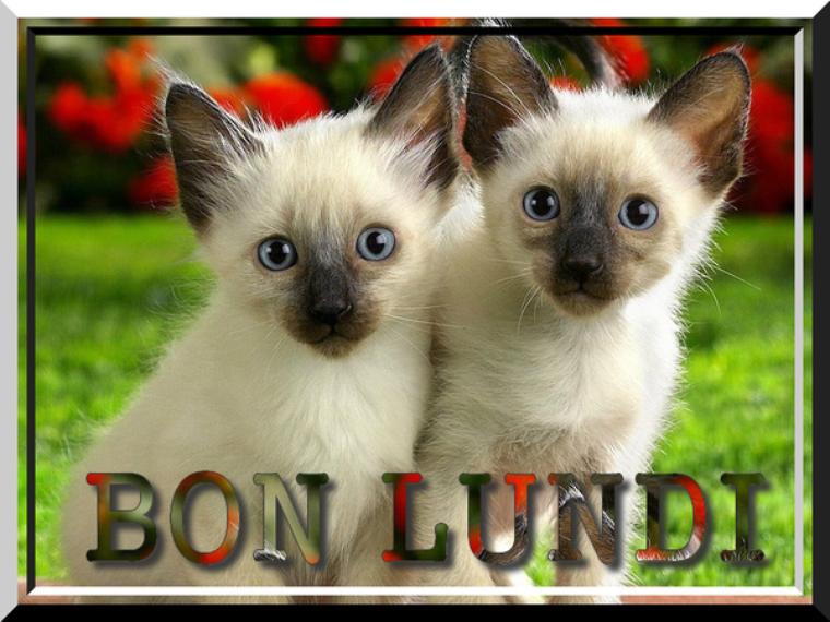 BONJOUR  MES  AMIS   NOUS  SOMMES   LE  LUNDI   11  JUIN  2018   C  EST  LA ST BARNABE ET  A  LA ST BARNABE.....JE  CROQUERAIS   BIEN  UN PETIT.....SABLE  .....SOURIRES....