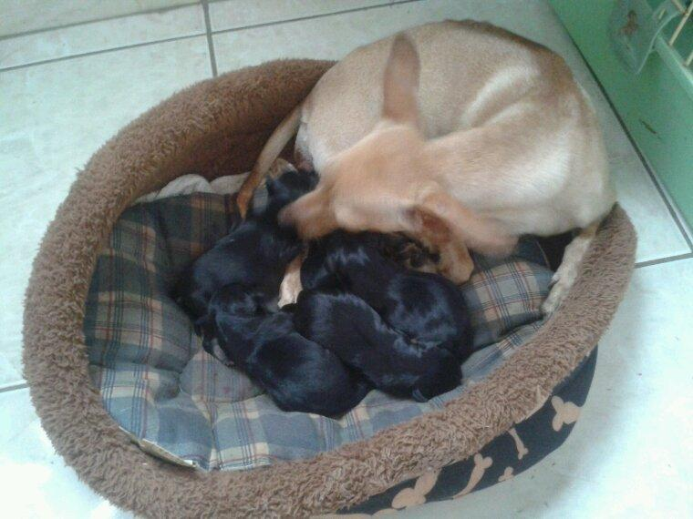 5 petits chiots nés un vendredi 13 ^^