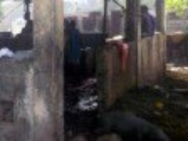 Jacmel - Santé : L'abattoir de la ville de Jacmel, un véritable scandale