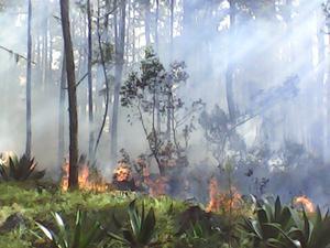 Sud'est – Environnement : Une partie du Parc la Visite détruite en feu, deux jours après l'opération…