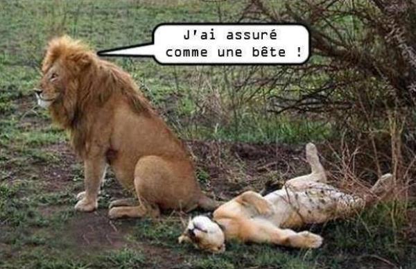 """Résultat de recherche d'images pour """"mardi humour image"""""""
