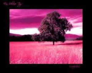 CHAPITRE 22: si l'ont ne voit pas tout rose, c'est parce que la vie nous en fait voir de toute les couleurs