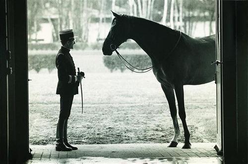 Le cheval t'apporte ce que l'être humain est incapable de te donner♥.
