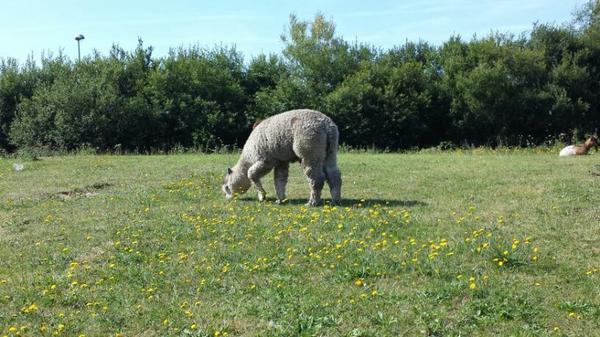 Le cirque thierry zavatta à La Richardais-Dinard (35) du vendredi 31 juillet au 8 aout (zoo)