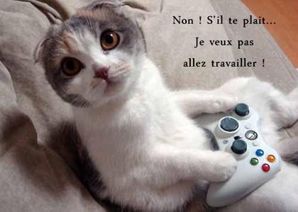 Une vie de chat <3