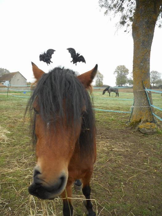 * 31 Octobre 2016 * Halloween's Spirit *