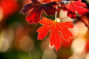 Favoris d'automne by Emma !! <3