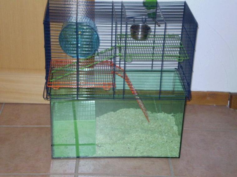 la cage des gerbilles