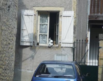 Les Chats du Sud de la France