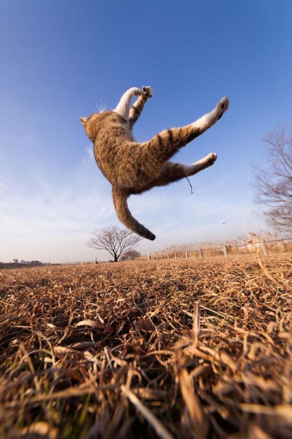 Seiji Mamiya : Photographies Sublimes qui Vous Plongeront Dans L'intimité du Chat