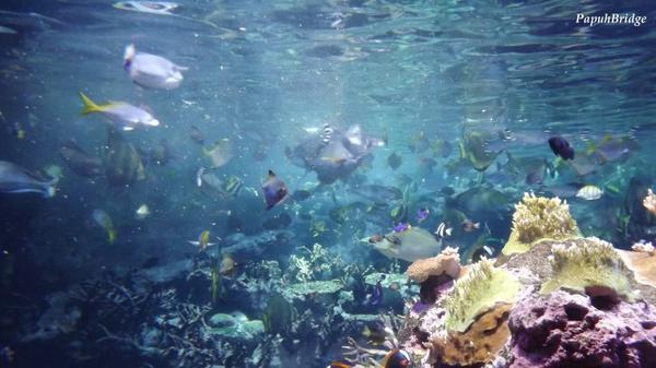 Le silence aquatique m'a fait sentir toute petite.