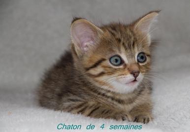 Sauver un chaton