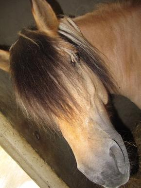 Les poneys de mon poney-club !!