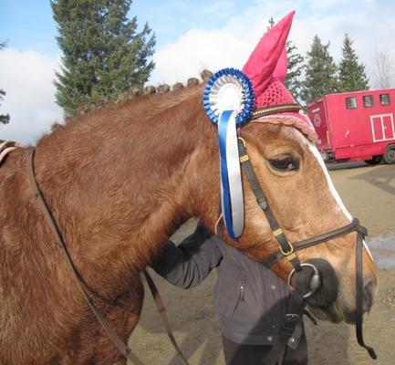 Concours du 26 févier 2012 à Tinténiac !!