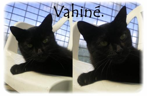 """""""Vahiné: Chatte noir..."""""""