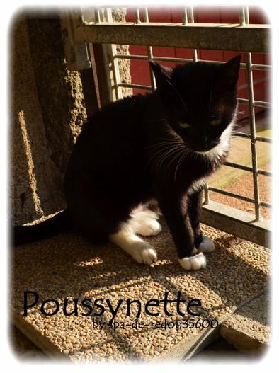 """""""Poussynette: Chaton femelle noire et blanche..."""""""