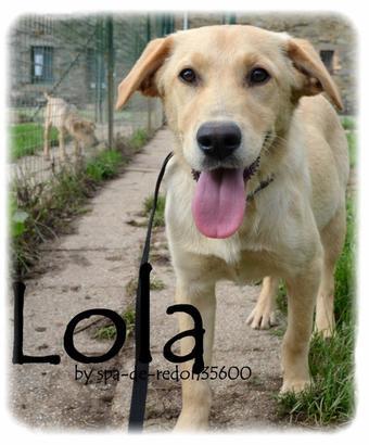 """""""Lola: Croisée labrador sable .."""""""