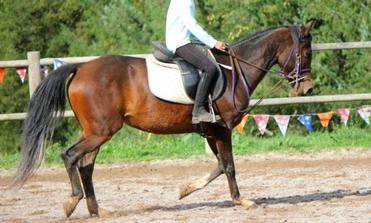 Journal Equestre ! ♥