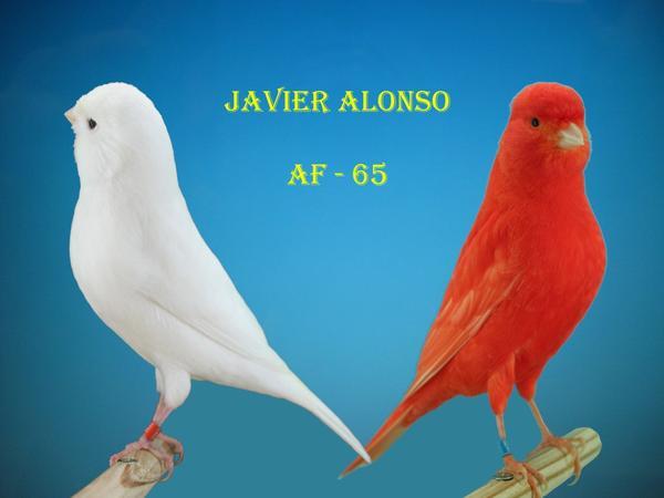 www.javieralonso.skyrock.com