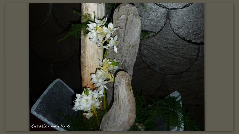 BOIS FLOTTE D ISLANDE