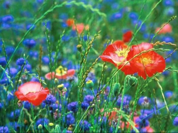 """"""" Rien que de jolies couleurs ... pour attendre 7 jours... l'arrivée du printemps """" !"""