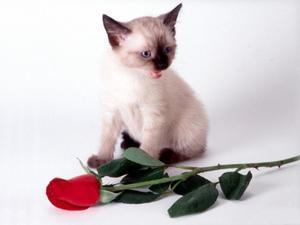 quelles roses