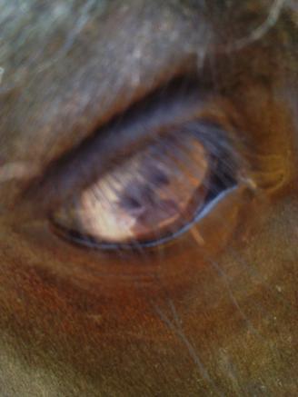 L'ame d'un cavalier se voit dans les yeux de sa monture....