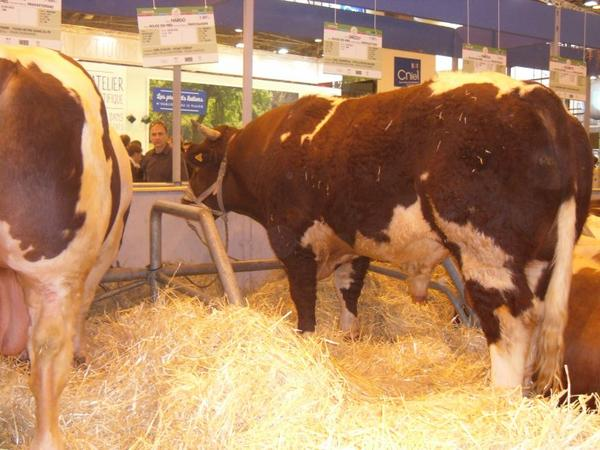 Salon del'agriculture n°3