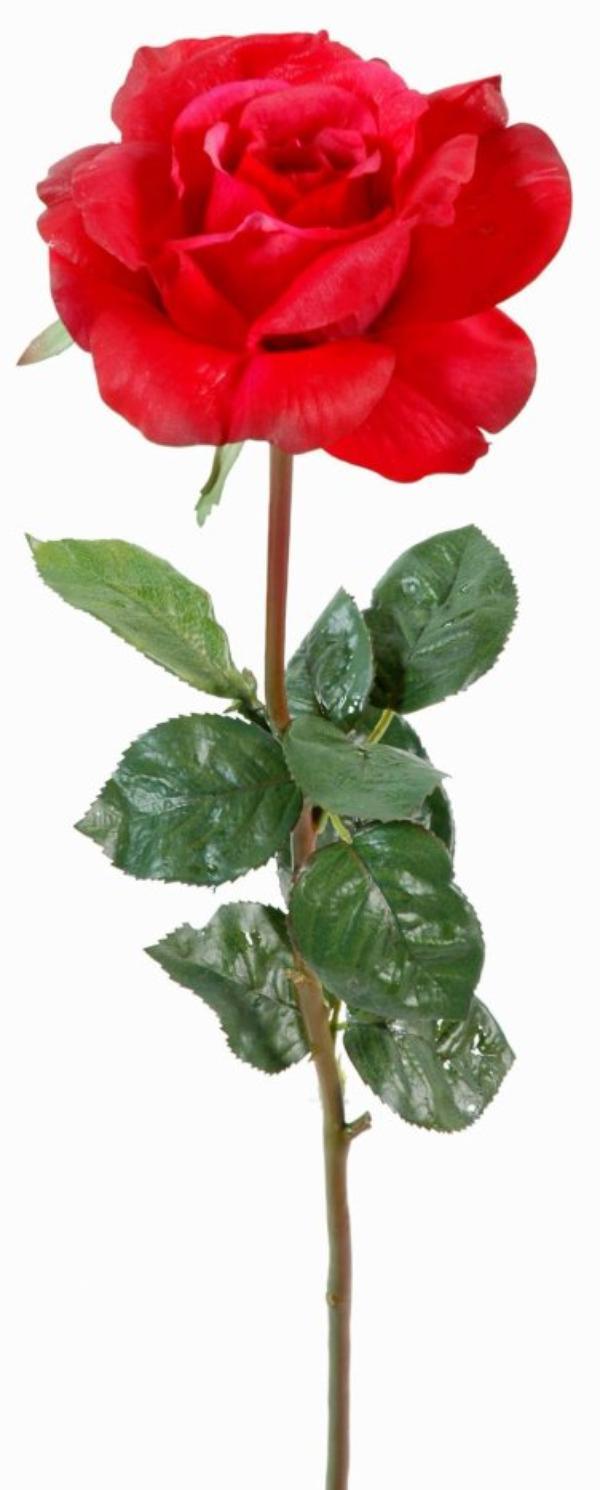 """"""" Mignonne allons voir si la rose, a ce matin éclose... """""""