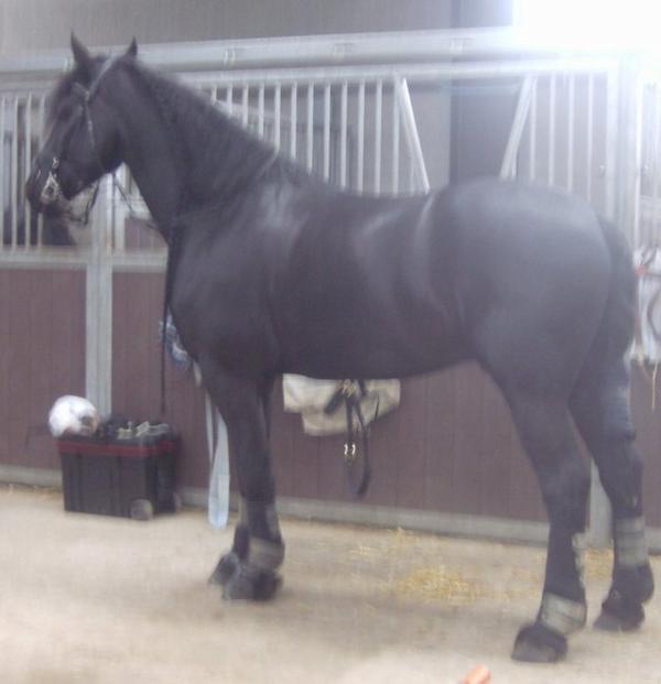 ici c'est le cheval a lili
