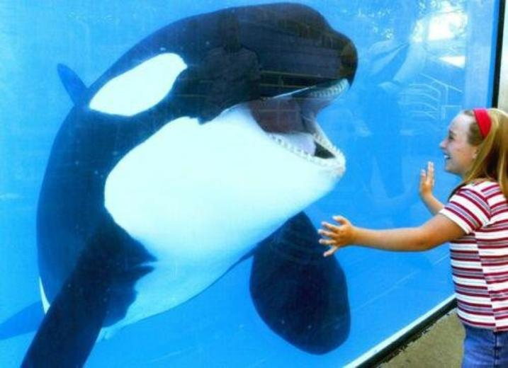 Sea World Texas . ❤