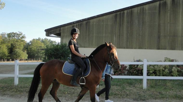 Le cheval .