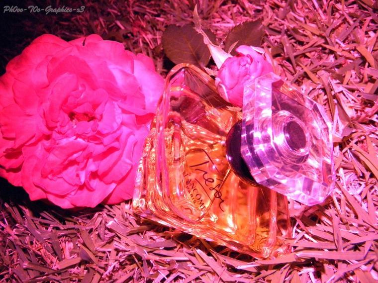 La beauté sans honnêteté,  c'est la rose sans parfum.