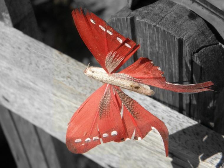 C'est l'effet papillon =)