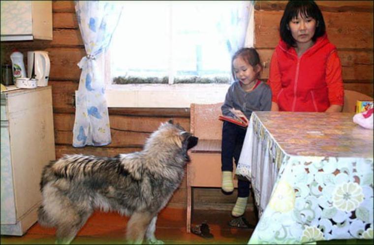 L'histoire de la jeune fille a pris d'assaut le pays, et une statue nommée « Fille avec son chien » a été construite à l'aéroport de Yakutsk en hommage à Karina et Kyrachaan.