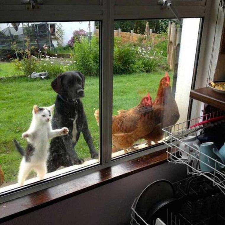 La curiosité chez les animaux