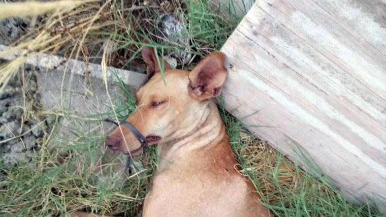 Jour après jour, les organisations de défense des animaux reçoivent des appels concernant des animaux dans un état épouvantable.